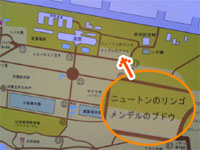 小石川植物園地図
