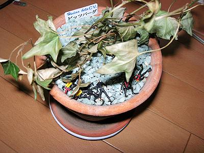 うちの植物